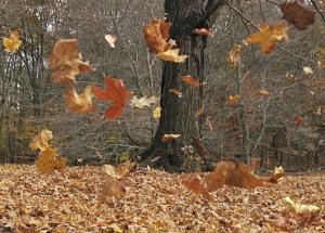 wind-blowing-leaves