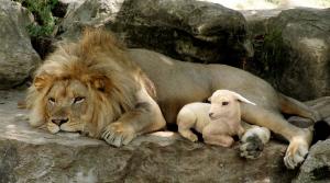 lion sheep