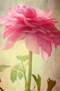 flowers VI